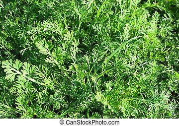 kruiden, gras