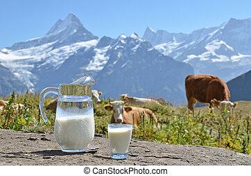 kruik, tegen, gebied, jungfrau, zwitserland, kudde, melk, cows.