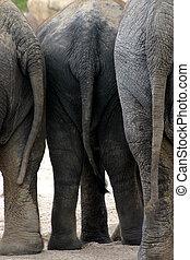 kruis, elefant