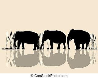 kruising, water, olifanten
