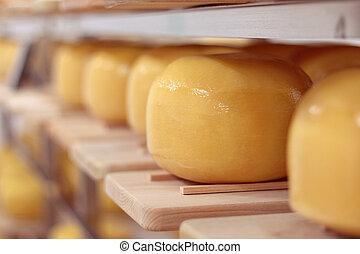 krutý, zbabělý, bochníky, sýr