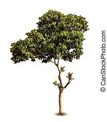 krydda, träd, leaves., isolerat, vektor, grön