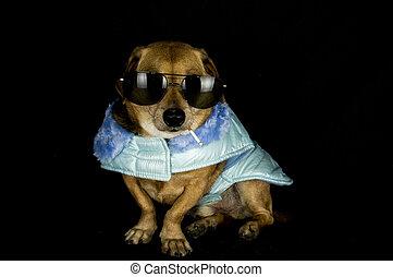 kryminalny, pies
