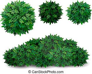 krzak, liście, korona, drzewo