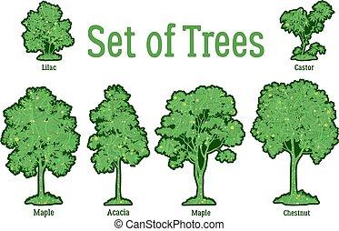 krzaki, rośliny, komplet, drzewa