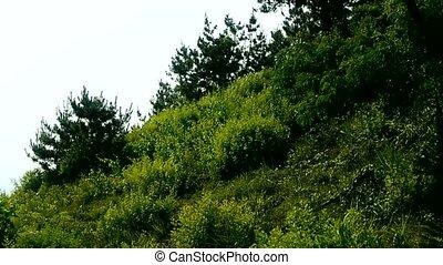 krzaki, w wietrze, huśtać się, drzewo