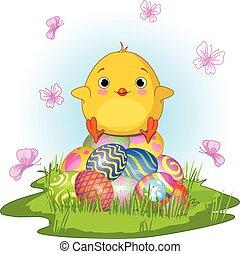 kuřátko, velikonoční, zbabělý