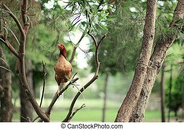 kuře, strom
