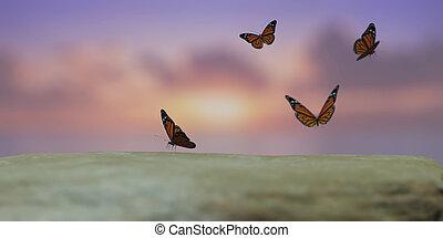 ku, słońce, przelotny, ilustracja, motyle, 3d