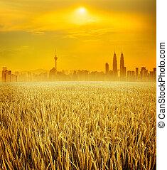 Kuala Lumpur city skyline and rice field