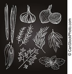 kuchařský, byliny, a, spices., vinobraní, illustration.