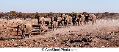 kudde, namibie, afrikaanse olifanten