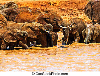 kudde van olifanten, in, de, savanne