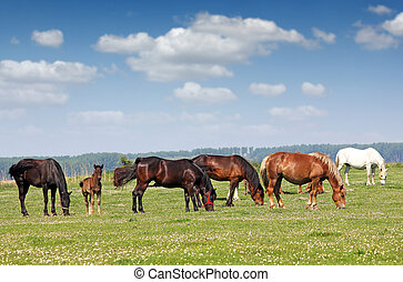 kudde van paarden, in, wei, welen seizoen op