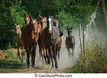 kudde van paarden