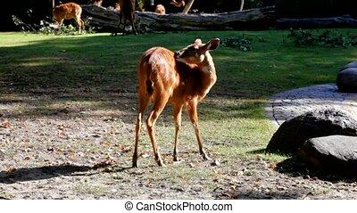 kudu antelope in the Berlin Zoo
