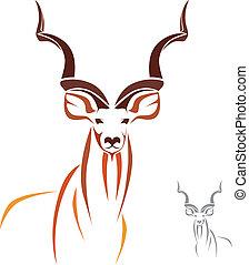 kudu, większy