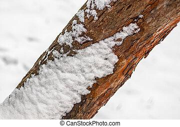 kufr, strom, sníh neposkvrněný, zima