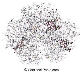 kugeln, stöcke, wiesen, hämoglobin, (deoxyhemoglobin), menschliche , hemes