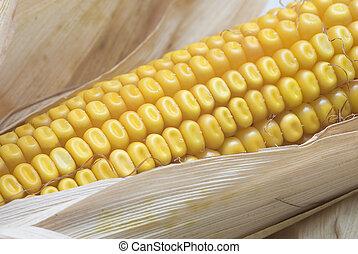 kukorica, ears., closeup