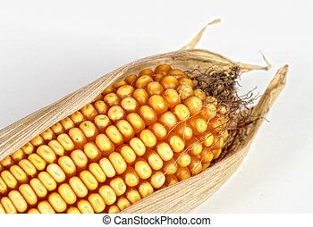 kukoricacső, háttér