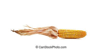 kukuřice, dále, jeden, běloba grafické pozadí