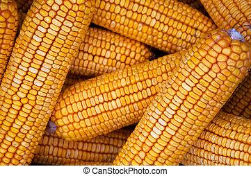 kukurydziany kaczan