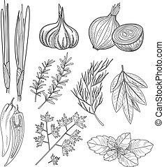 kulinarny, zioła, illustration., spices., rocznik wina