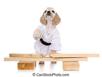 kung fu dog - american cocker spaniel puppy dressed like a...