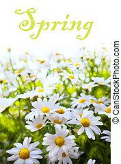 kunst, abstract, achtergrond, lente, zomer, bloem, in, gras