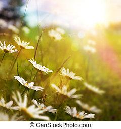 kunst, abstract, natuur, achtergrond, met, zomer, bloem, in, gras