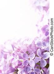 kunst, achtergrond, sering, lentebloemen
