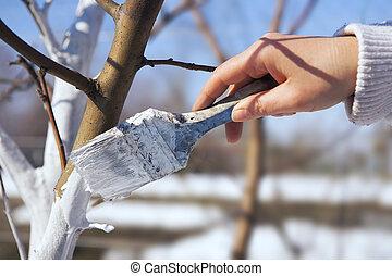 kunst, appel, witten, de boomstam van de boom, tuin