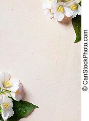 kunst, jasmine, forår blomstrer, ramme, på, gamle, avis, baggrund