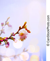 kunst, lente, achtergrond, met, roze, blossom