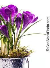 kunst, lente, achtergrond, mooi, vrijstaand, witte bloemen