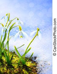 kunst, lente, sneeuw, bos, bloemen, snowdrop