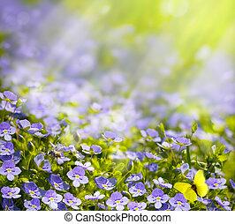 kunst, lente, wilde bloemen, in, de, zonlicht, achtergrond