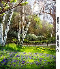 kunst, lente, zonlicht, bos, groene, tijd