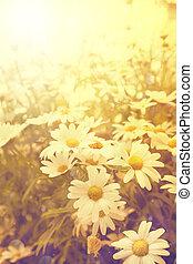 kunst, ouderwetse , bloemen, achtergrond