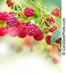 kunst, raspberry., ontwerp, groeiende, organisch, besjes