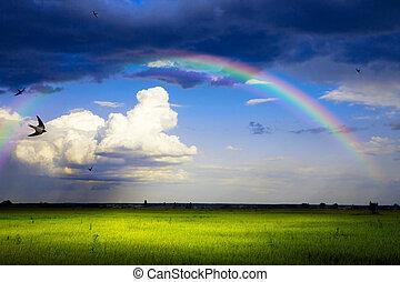 kunst, sommer, szene, panorama, von, natur, nach, der, regen