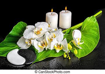 kurort, sten, begrepp, blomma, phalaenopsis, vaxljus, yin-yang, dagg, isolerat, struktur, uppe, bakgrund, svart, nära, blad, orkidé