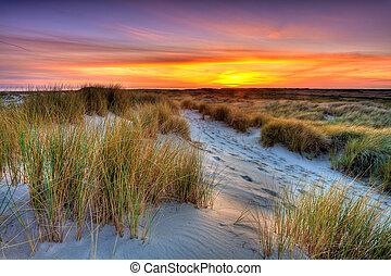 kust, med, sandpappra dyner, hos, solnedgång