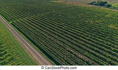 Kutjevo vineyards aerial - Aerial descending view of the...
