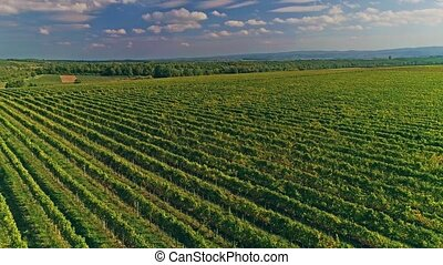 Kutjevo vineyards aerial - Aerial view of the vineyards in...