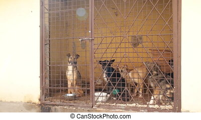 kutyák, bezárt, alatt, a, kalitka