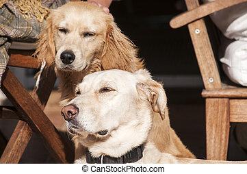 kutyák, képben látható, bukás, nap, irodalom, előcsarnok
