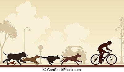 kutyák, vadászrepülőgép, biciklista