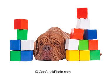 kutya, építő